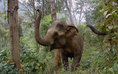 Goodbye to EleAid – our Asian elephant charity